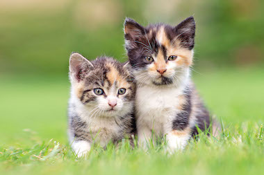 Veterinarian in Gurnee, IL - Feline Friendly